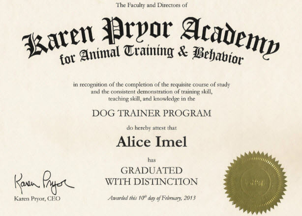 How to Become a Dog Trainer: Career, Salary & Training ...