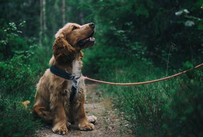 LA Dog Training