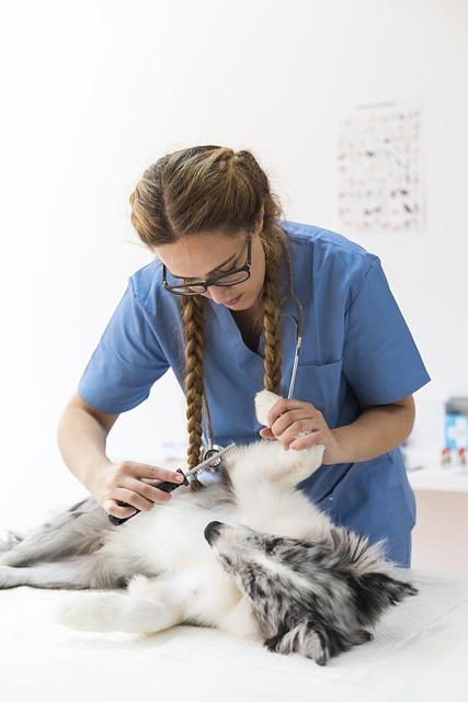 Marine Veterinary Technician