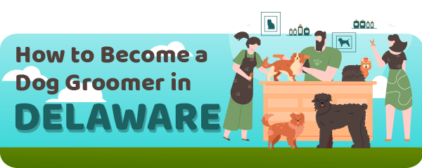 How to Become a Dog Groomer in Delaware