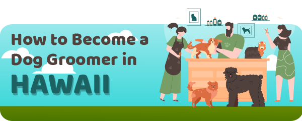 How to Become a Dog Groomer in Hawaii