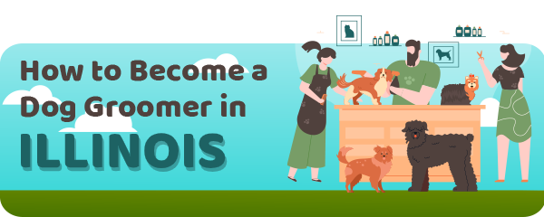How to Become a Dog Groomer in Illinois