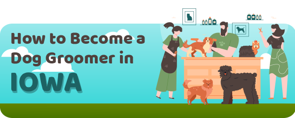 How to Become a Dog Groomer in Iowa