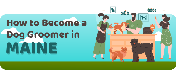 How to Become a Dog Groomer in Maine