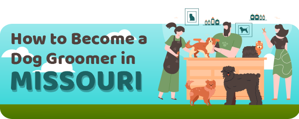 How to Become a Dog Groomer in Missouri