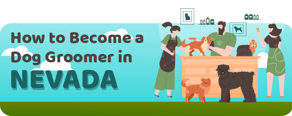 How to Become a Dog Groomer in Nevada