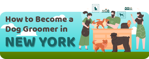 How to Become a Dog Groomer in New York