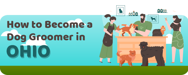 How to Become a Dog Groomer in Ohio