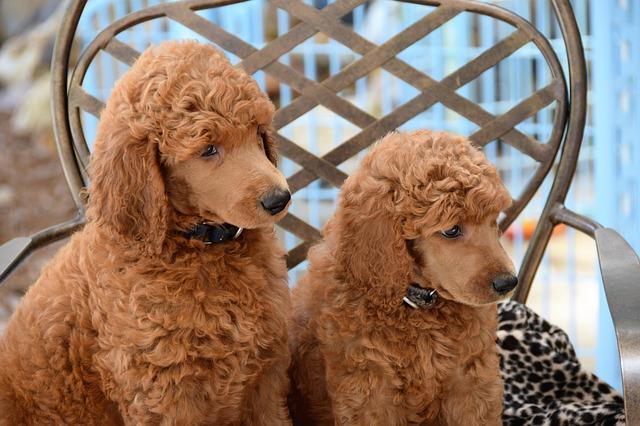 dog grooming online