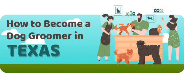 How to Become a Dog Groomer in Texas