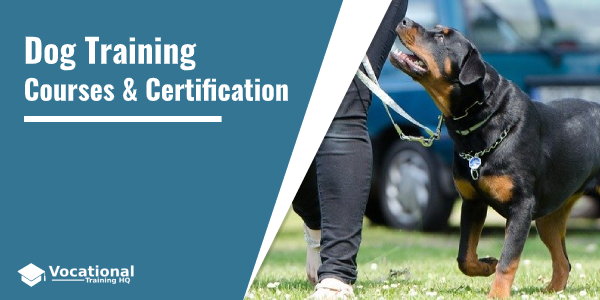 Dog Training Courses & Certification