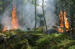 forest fire inspectors