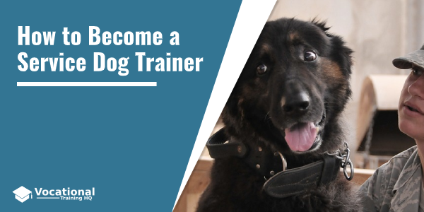 How to Become a Service Dog Trainer