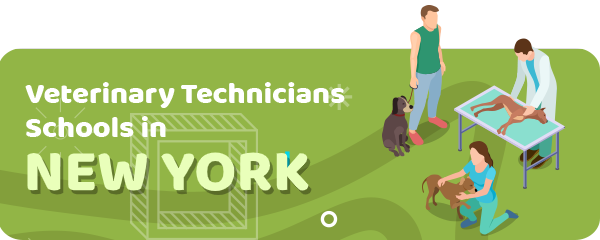 How to Become a Veterinary Technician in New York