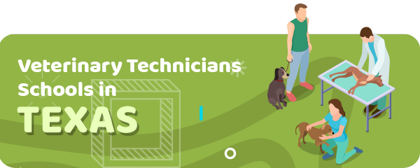 How to Become a Veterinary Technician in Texas