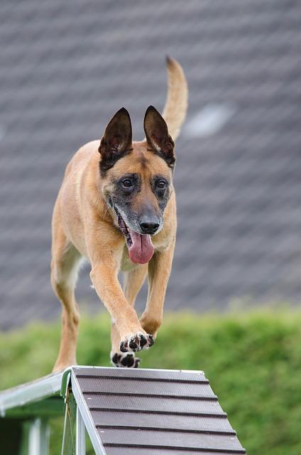 learn dog training