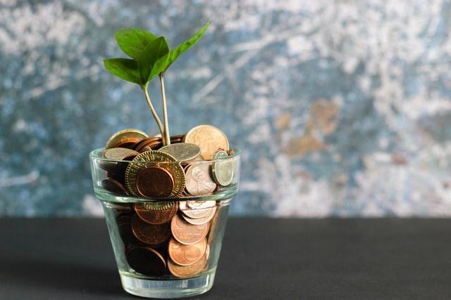 money growing plant