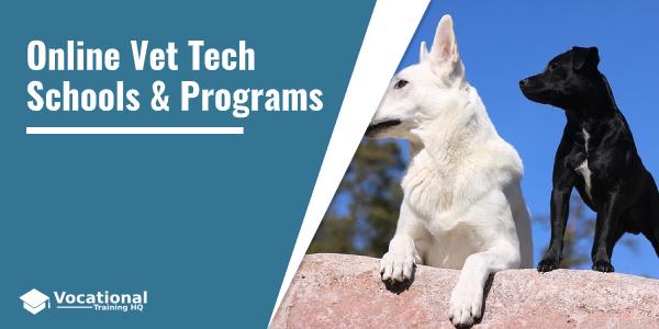 Online Vet Tech Schools & Programs