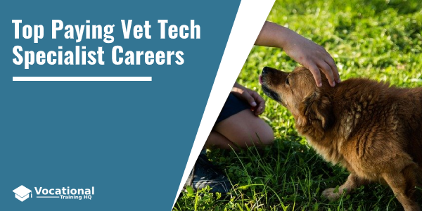 Top Paying Vet Tech Specialist Careers