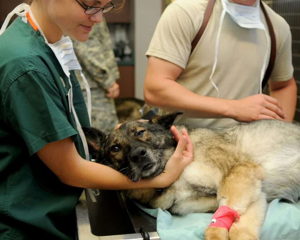Meaningful Careers, Job Options, Helping Animals