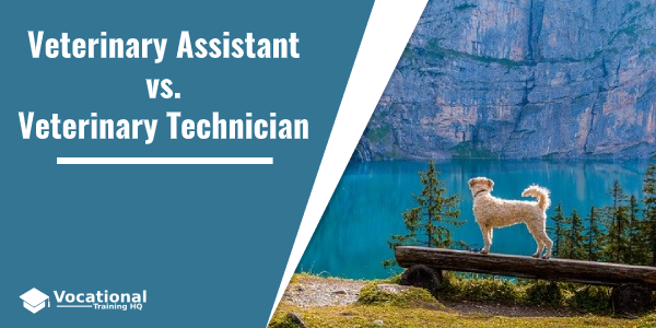 Veterinary Assistant vs. Veterinary Technician