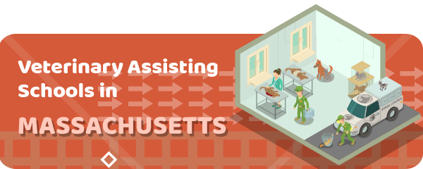 Veterinary Assistant In Massachusetts Schools Salary Licensing 2020 Updated