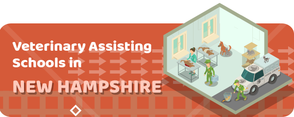 How to Become a Veterinary Assistant in New Hampshire