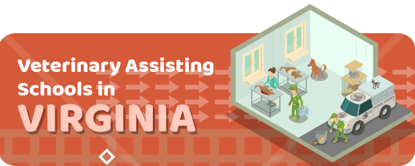 How to Become a Veterinary Assistant in Virginia