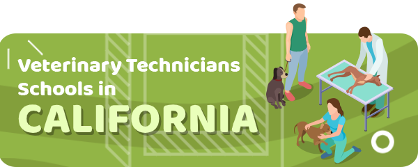 How to Become a Veterinary Technician in California