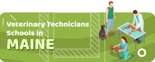 How to Become a Veterinary Technician in Maine