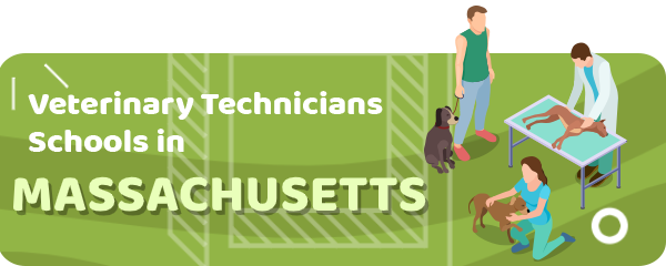How to Become a Veterinary Technician in Massachusetts