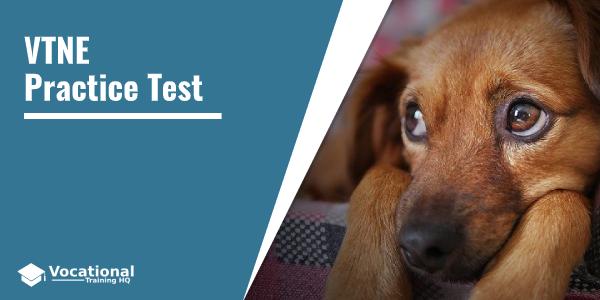 VTNE Practice Test (Veterinary Technician Exam)