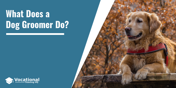 What Does a Dog Groomer Do?