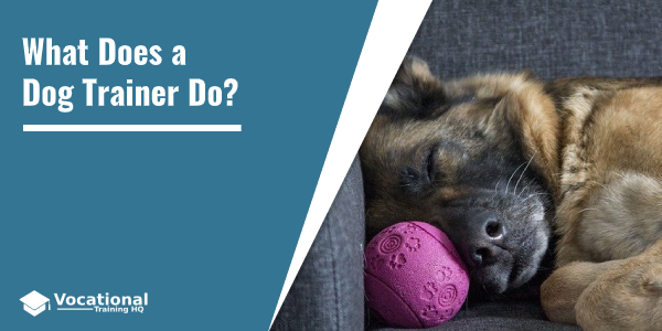 What Does a Dog Trainer Do?